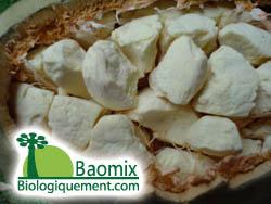 Le fruit du Baobab ouvert, laissant apparaître la pulpe riche en antioxydant naturel puissant